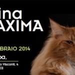 FELINA MAXIMA – Fiera dei gatti sul Lago di Como