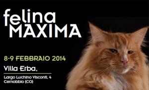 felina maxima
