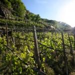 Itinerari enogastronomici in Valtellina