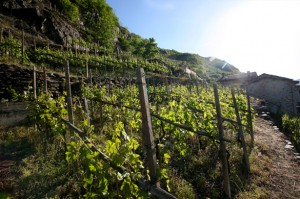 vigneti in valtellina - lake como