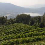 Wine passion: between vineyards and Lake Como wine cellars