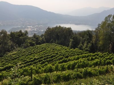 wine passion Lake Como