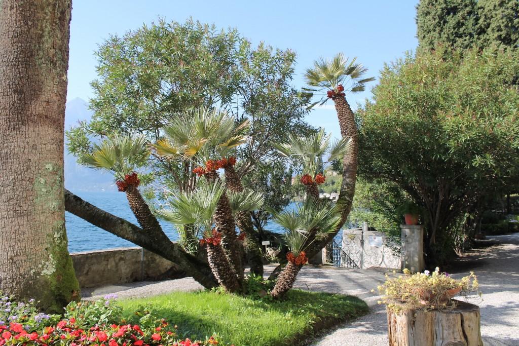 Il giardino Botanico villa Monastero