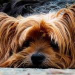 Hotel sul Lago di Como che accetta cani? L'hai trovato