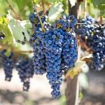 I vini del Lago di Como: un tesoro da scoprire