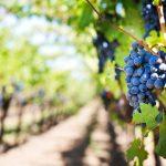 Valtellina, a land of special wines