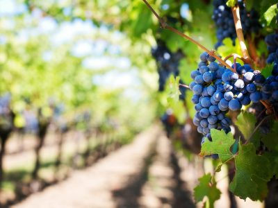 Valtellina terra di vini speciali