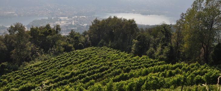 wine passion Lake Como