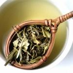 Un viaggio nel tè e nel profumo delle camelie a Villa Carlotta – Lake Como