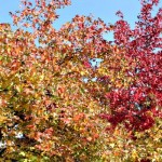 Il foliage sul lago di Como: un mix di colori d'autunno
