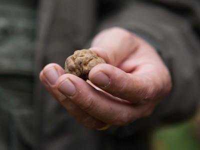truffle on Lake Como