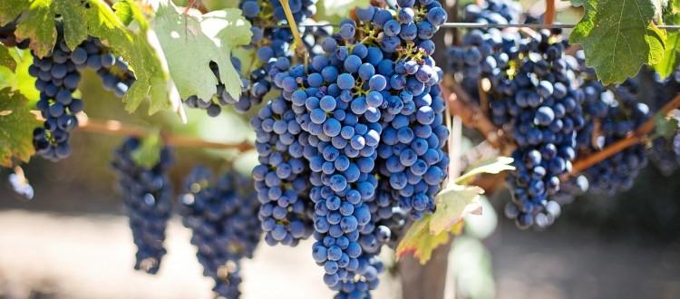 Lake Como wines